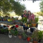 Circle members sell plants for Friendship Bridge
