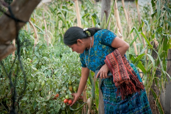 a member of the Women's Credit & Training program, Isabel is improving her skills and her yield